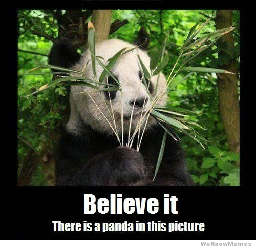 believe-it-there-is-a-panda-in-this-picture